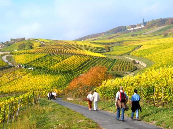 Wandern Rüdesheim Assmannshausen Rheinsteig